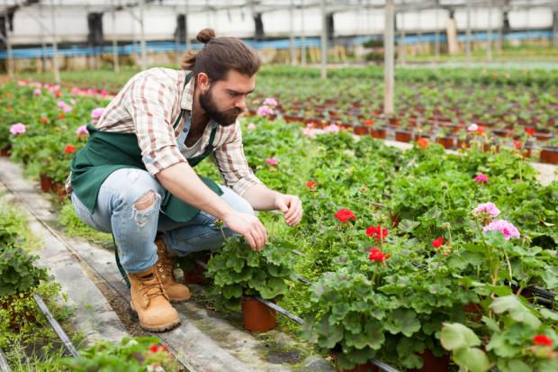 Jedną z najczęściej wybieranych roślin na taras czy balkon jest pelargonia. Jest stosunkowo łatwa w utrzymaniu, dobrze toleruje nawet lekkie przesuszenie czy nasłonecznienie.