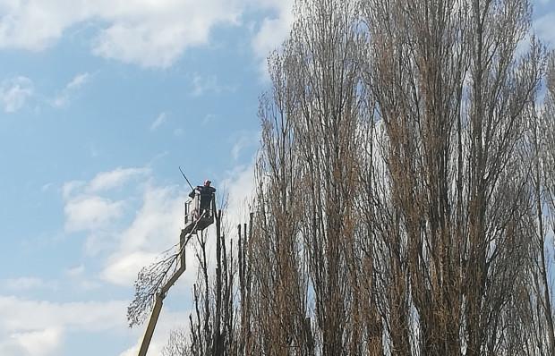 Przez dwa dni cięto drzewa na Dolnym Mieście.
