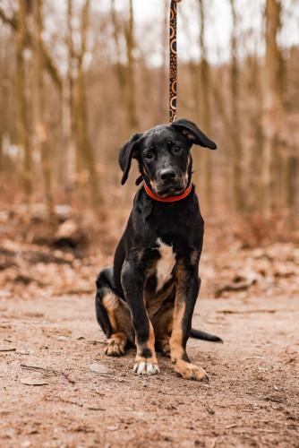 Szukamy dla Simby odpowiedzialnego domu, który w pełni podjąłby się opieki zarówno zdrowotnej, jak i nauki, aby wyrósł z niego pies pewny siebie, ciekawy świta i radosny.