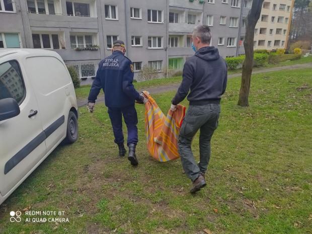 Ekopatrol Straży Miejskiej w Gdyni przewiózł koziołka do lecznicy weterynaryjnej.