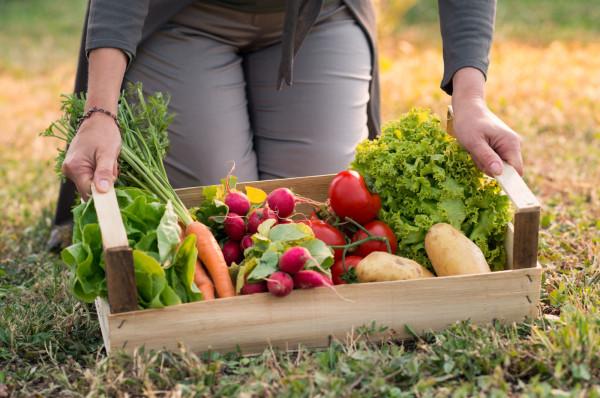 Założenie własnego warzywnika nie jest kosztowne, ale wymaga dużo pracy i czasu.