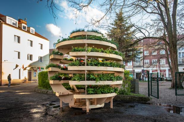 Growroom, czyli kula pełna roślin, stoi na pl. gen. Maczka w dzielnicy Strzyża.