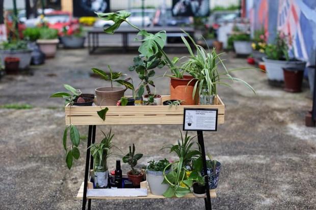Oprócz zielnika działa też punkt wymiany roślin.