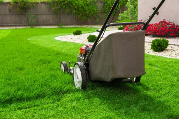 Dobra kosiarka usprawnia przycinanie trawnika i sprawia, że możemy zachować go w dobrej kondycji.