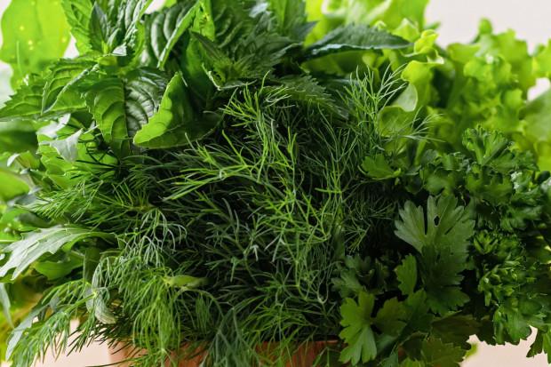 Najpopularniejszymi świeżymi ziołami, których zazwyczaj używa się w kuchni, są: bazylia, mięta, natka pietruszki i koperek.