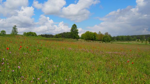 Kwietna łąka, zapewne pełna owadów