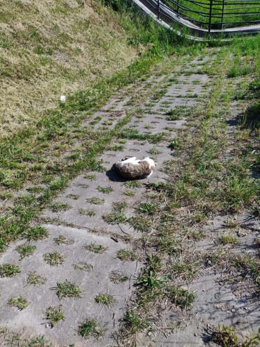 Młody kot wpadł do Kanału Raduni. Udało się udzielić mu pomocy.