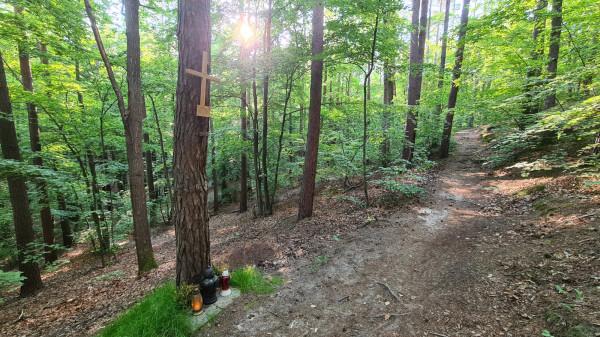 To w tym miejscu zginęła 26 lat temu Daria Reluga. Większy krzyż przybił do drzewa jej ojciec. Mniejszy, zniszczony krzyż pojawił się tam dwa miesiące po zabójstwie. Nie wiadomo, kto go umieścił.