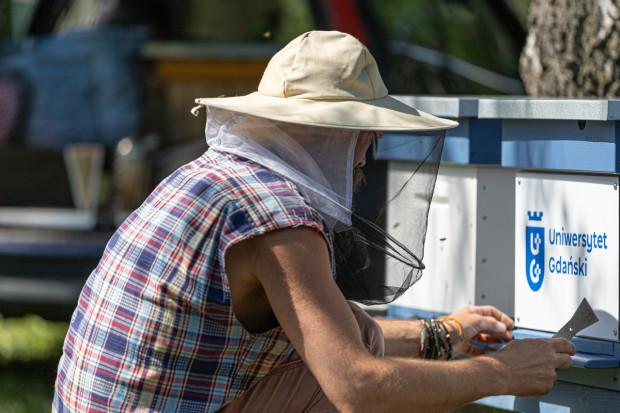 Po instalacji uli teraz pozostaje czekanie na owoce pracy pszczół.