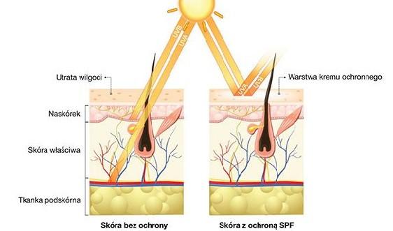 Promienie UVA są głównym czynnikiem powodującym fotostarzenie poprzez zaburzenie funkcji bariery ochronnej skóry, wywoływanie stresu oksydacyjnego, degradację włókien kolagenu i elastyny, modyfikację DNA komórek skóry, uszkadzanie naczyń włosowatych i zaburzanie ukrwienia skóry.