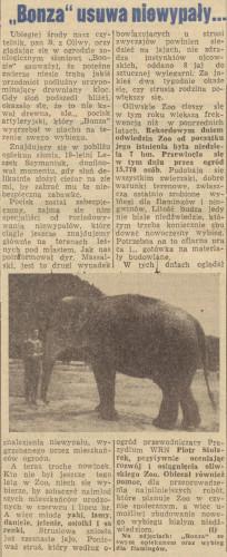 """Pocisk wygrzebała z piachu na terenie swego wybiegu nawet... słonica Bonza w oliwskim zoo! """"Dziennik Bałtycki"""" z 19 sierpnia 1966 r."""