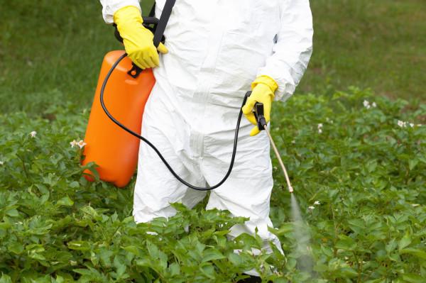 Pestycydy szkodzą nie tylko szkodnikom; zatruwają też ptaki, płazy i zwierzęta domowe.