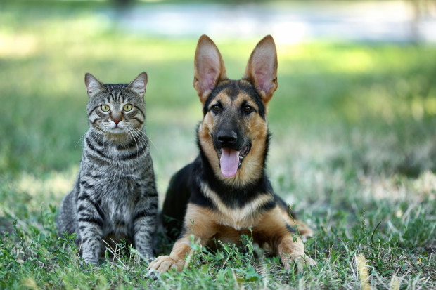 Pośród projektów Budżetu Obywatelskiego w Gdyni znajdują się też takie, które dotyczą zwierzaków.