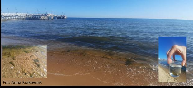 - W przypadku Morza Bałtyckiego kluczowe znaczenie ma temperatura wody. Sinice najlepiej rozwijają się, gdy temperatura wody będzie powyżej 16 stopni Celsjusza - mówi dr Justyna Kobos.