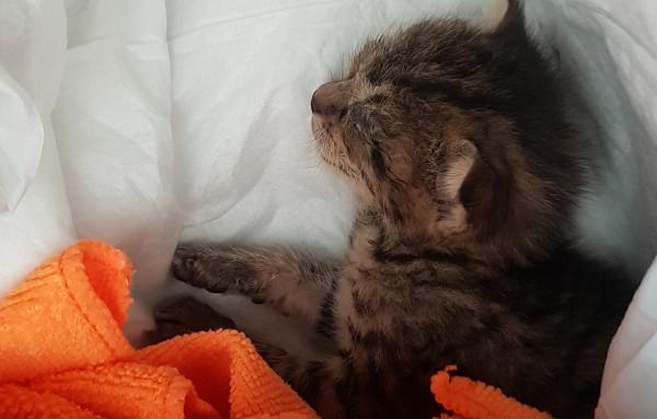 W ubiegłym roku pracownik sortowni śmieci w Szadółkach znalazł tego małego kotka. Trafił do nowego domu.