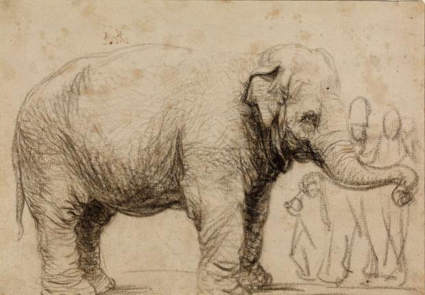Szkic Rembrandta przedstawiający Hansken. Źródło: British Museum