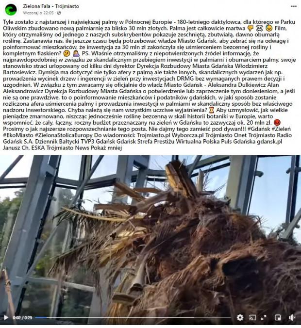 Informację o uschniętej palmie Zielona Fala podała w niedzielę wieczorem w mediach społecznościowych.