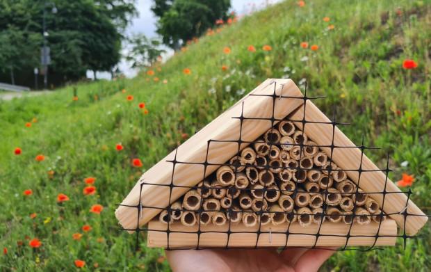 """Pierwszy spacer z cyklu """"Terenówki przyrodnicze"""" dotyczył będzie owadów mieszkających na Górze Gradowej."""