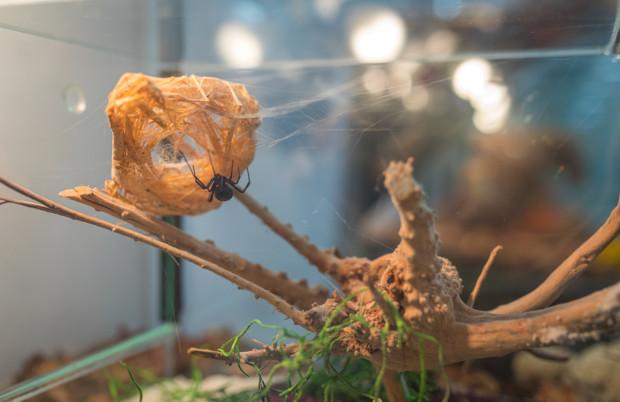 Goście wystawy oglądają pająki i skorpiony ze wszystkich zamieszkałych kontynentów świata.