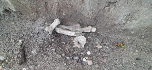 Zdjęcia najprawdopodobniej ludzkich szczątków, które w ubiegłą niedzielę można było zobaczyć w wykopie.