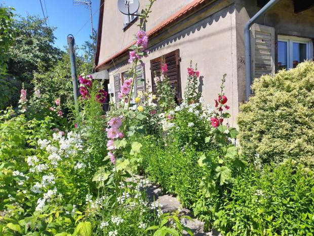 Jeden z ogrodów nagrodzonych w Gdyni.