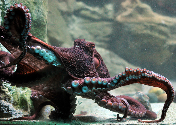 W Akwarium Gdyńskim podziwiać można egzotyczne zwierzęta morskie.