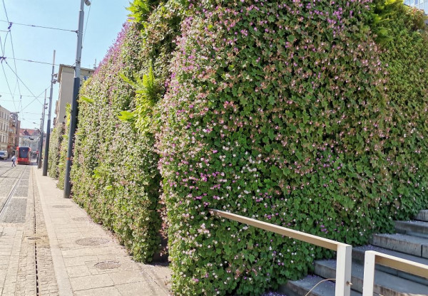Zielona ściana w Katowicach. Jej właściciel będzie zwolniony z podatku od nieruchomości.