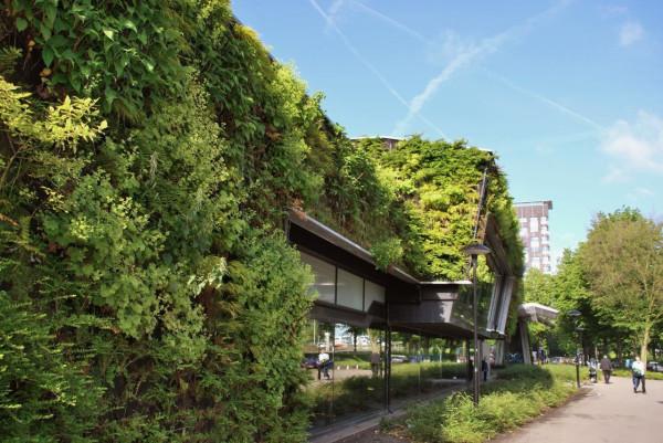 Zielony budynek obiektu sportowego w Amsterdamie.