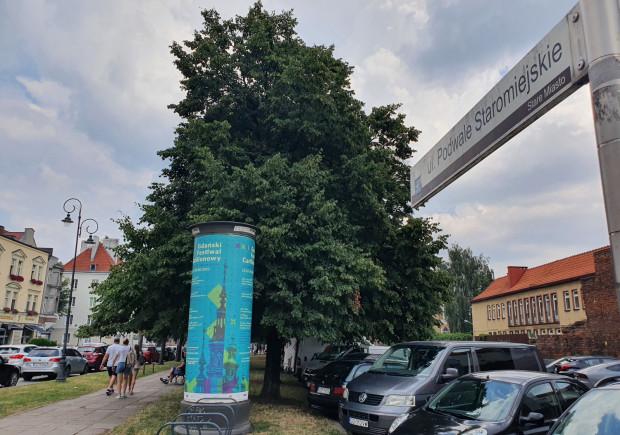 Dzięki projektowi wybranemu w Zielonym Budżecie Obywatelskim, Podwale Staromiejskie ma zyskać nowe drzewa.
