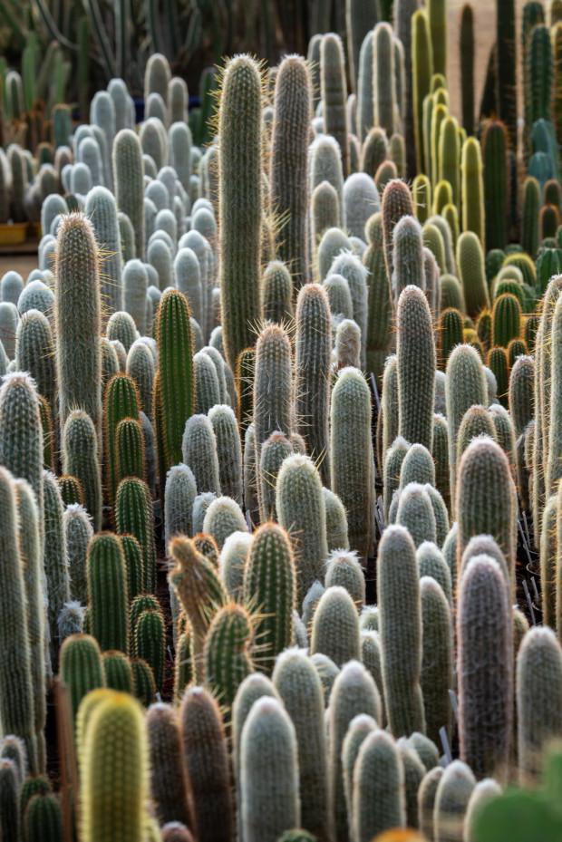 Utrzymanie kolekcji rocznie kosztuje ok. 10 tys. zł. Głównie to koszt opału, bo pomieszczenie, w którym znajdują się rośliny, trzeba zimą ogrzać.