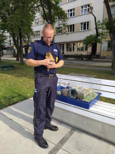Kawia domowa została porzucona na skwerze Kościuszki w Gdyni.