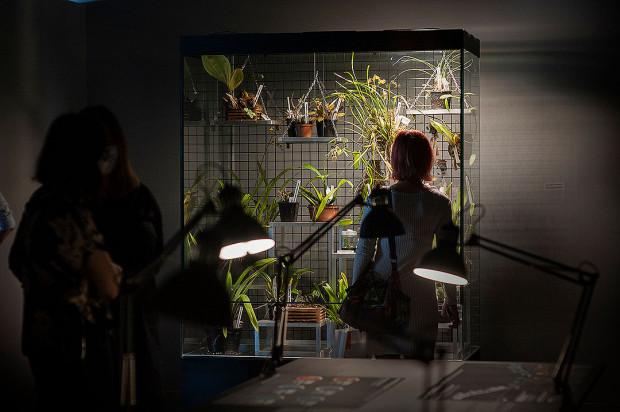"""""""Klimaks"""" w Muzeum Emigracji w Gdyni opowiada o skomplikowanych związkach roślin i ludzi."""