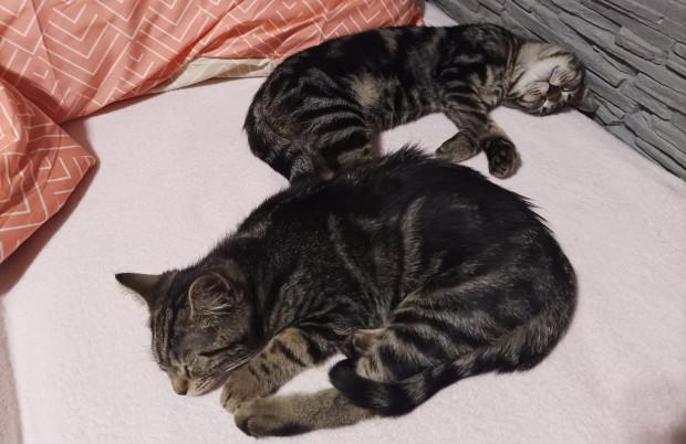 Te dwa z czterech uratowanych ze śmietnika kotów trafiły do schroniska Promyk, gdzie czekają na nowy dom.