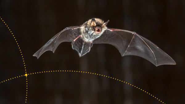 Nietoperze to wciąż jedne z najbardziej skrytych przed ludzkimi oczami zwierząt.
