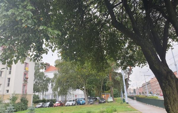 - Miasto musi zacząć sadzić znaczące ilości drzew, inaczej nic się nie zmieni - wskazują aktywiści z Zielonej Fali Trójmiasto.