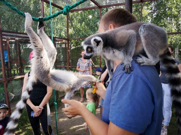 Lemur Park w Rumi przyjmuje gości do końca września.