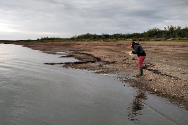 -  Region Kołymy jest odwadniany przez jedną z wielkich rzek syberyjskich, która odprowadza wody do Oceanu Arktycznego, a więc zanieczyszczenia potencjalnie przez nas wykryte mogą oddziaływać na duży obszar - mówi dr Krystyna Kozioł.
