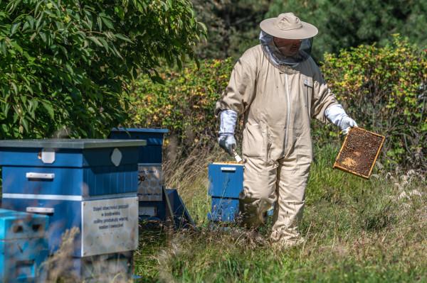 Pszczoły w poszukiwaniu dystansu mogą pokonywać dystans nawet do 5 km od ula.