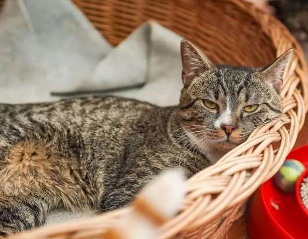 Schroniska dla zwierząt w Trójmieście potrzebują posłań dla psów i kotów.