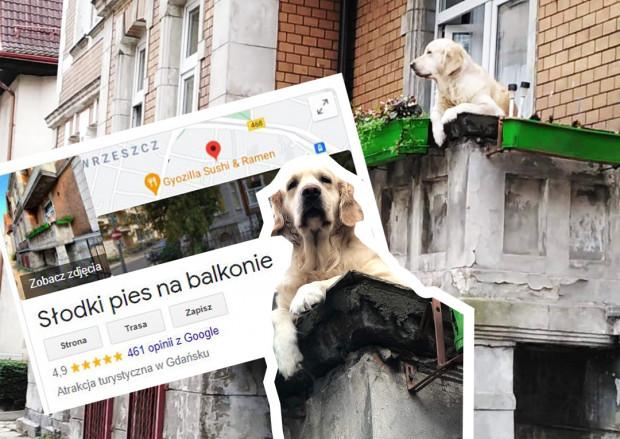 Słodki pies na balkonie jako atrakcja turystyczna ma coraz więcej ocen i opinii.