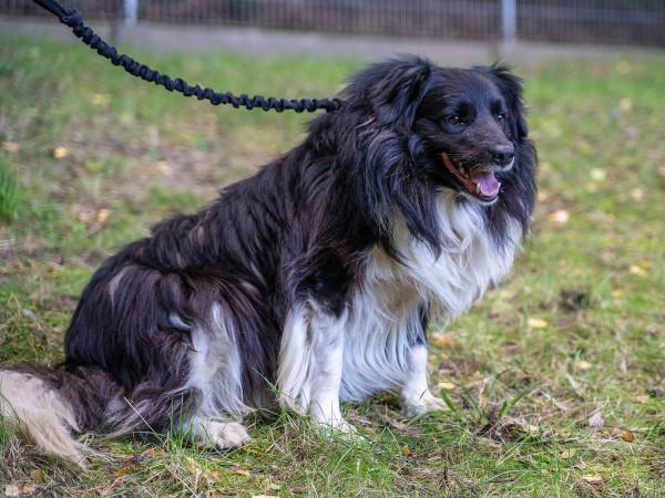 Psy z interwencji w Somoninie będą niedługo przygotowywane do adopcji.