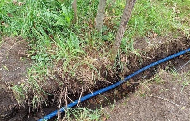Przy budowie latarni w Oliwie stwierdzono potencjalne uszkodzenie systemów korzeniowych drzew.