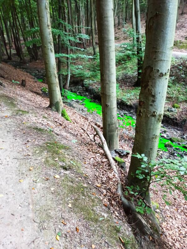 Intensywnie zielona woda w gdyńskich lasach zaniepokoiła mieszkańców.