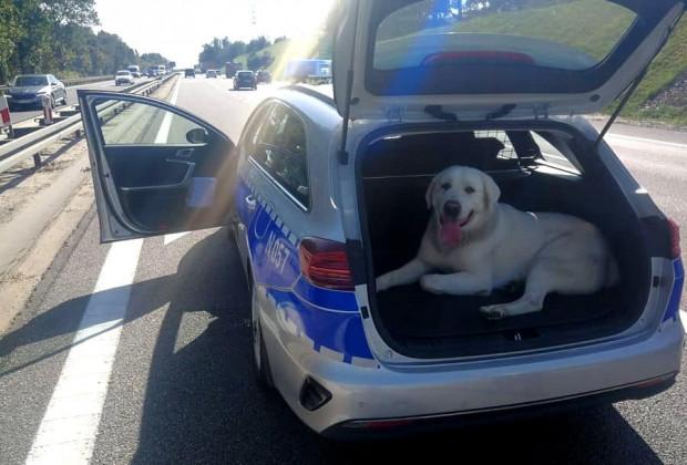 Gdańscy policjanci zaopiekowali się psem, udało się ustalić też jego właściciela.