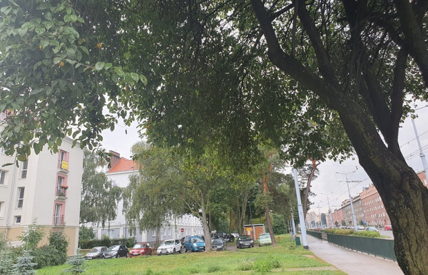 Na pierwsze mirabelkowe drzewo wpada się zaraz po wyjściu z tramwaju na przystanku Paska.
