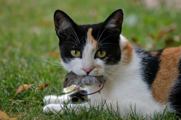 Czy kot mieszkający od urodzenia na ulicy jest zwierzęciem dzikim?