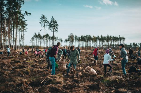 """W tegorocznej edycji akcji """"Do nasadzenia"""", która odbędzie się w sobotę, 16 października, do zalesienia będzie powierzchnia blisko 11 ha."""
