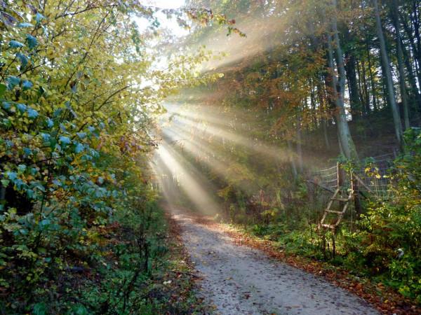 Lasy Trójmiejskiego Parku Krajobrazowego są urokliwe o każdej porze roku, nic więc dziwnego, że wiele osób korzysta z istniejących tam szlaków spacerowych.