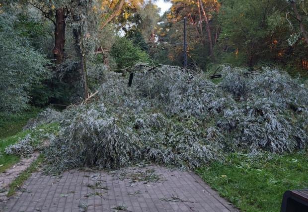 Strażacy interweniowali ws. powalonych drzew.