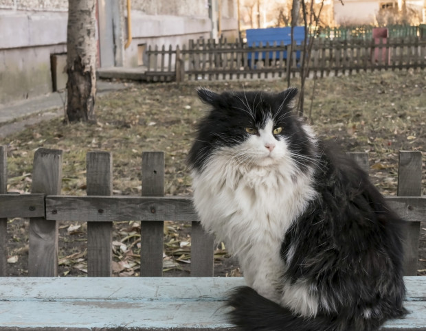 Opiekunowie kotów wskazują na kiepską jakość karmy dostępnej w ramach wygranego projektu Budżetu Obywatelskiego w Gdańsku.